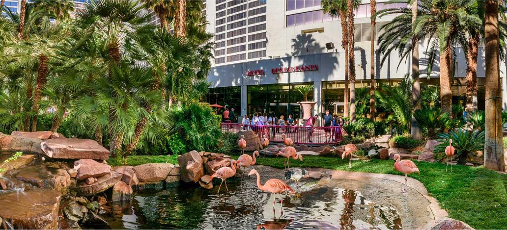 Flamingo Wildlife Habitat las vegas estados unidos