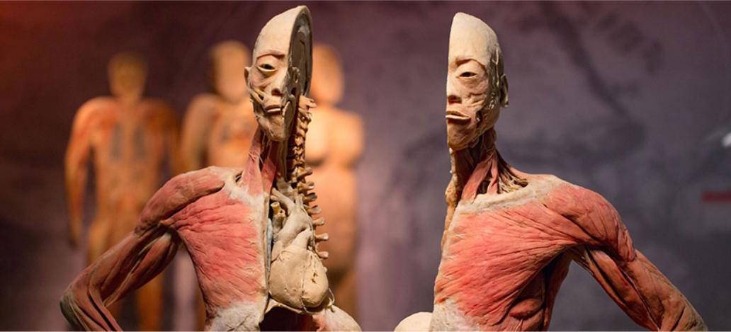 Bodies: The Exhibition em las vegas hotel casino